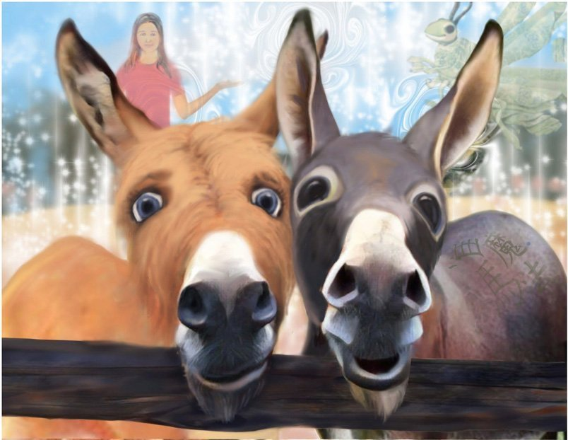 Donkeys - Finding Grace